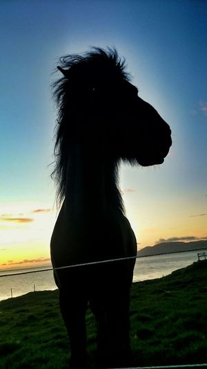 Horse Sunset Taking Photos Hanging Out Enjoying Life SummerNights