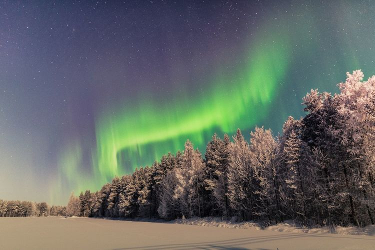 Aurora snake Tree Beauty In Nature Winter Cold Temperature Snow Night Tranquility Astronomy Green Color Tranquil Scene No People Star - Space Sky Nature Forest Aurora Borealis Northern Lights Atmospheric Mood Outdoors Green Color Landscape Low Angle View Freshness Travel Scenics
