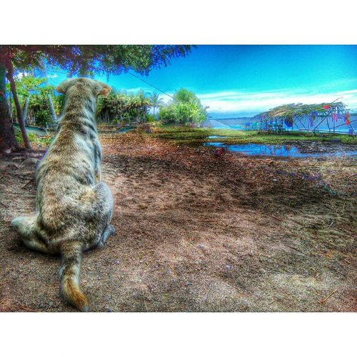 The dog is standing and watching. 050315