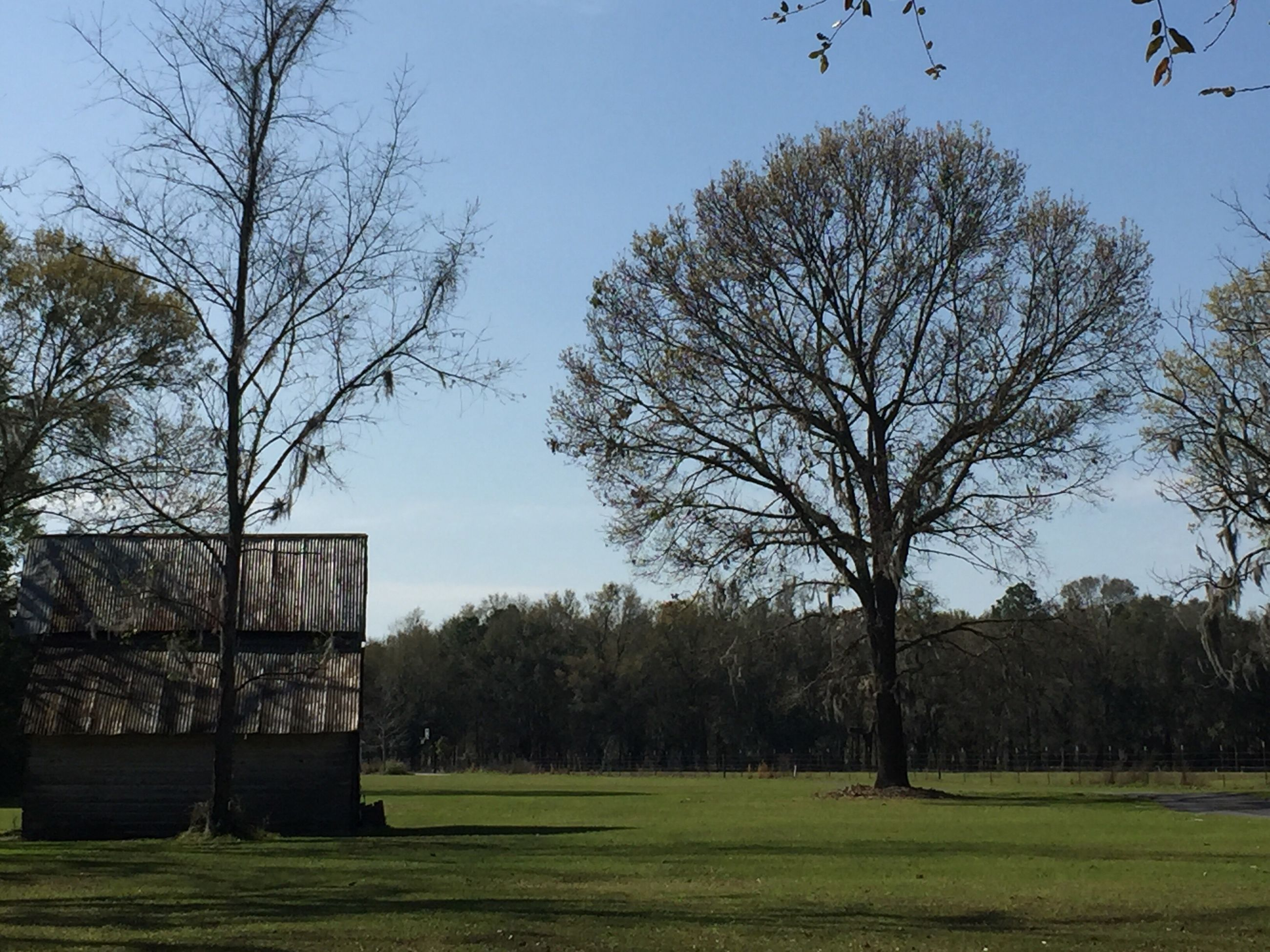 tree, nature, outdoors, no people, day, growth, grass, sky, beauty in nature, architecture