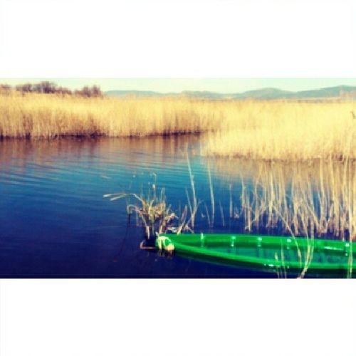 Domingueo en las Tablas de Daimiel Domingueo Daimiel ParqueNacional Naturaleza Humedal NationalPark Nature Wetland