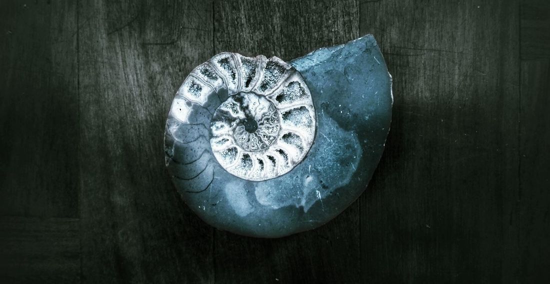 Re-Edit of my Ammonite Fossil 🎨Fossil Ammonite Nautilus Shell Stone Petrified Dinosaur Rock Life Essence Showcase March Contrast Daylight Ancient Evolution  Ancestors Snail Natural History Beauty Texture Surface Pattern Perfection First Eyeem Photo