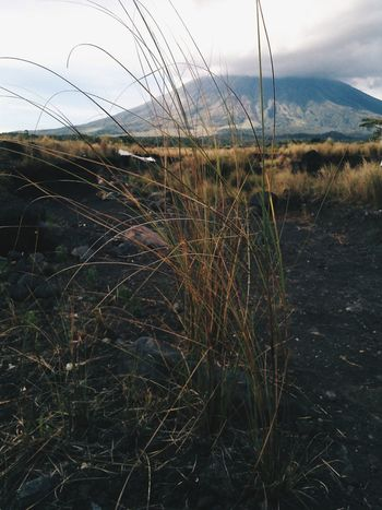 Relaxing Eye For Photography Grass Mayon Volcano Philippines Camalig Love My Hometown
