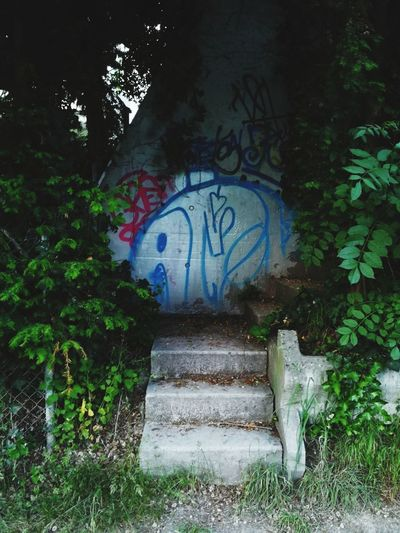 Graffiti Street Art Text Tree Outdoors No People Day Growth Plant First Eyeem Photo The Street Photographer - 2017 EyeEm Awards