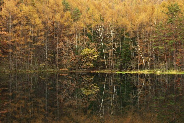 御射鹿池 山の風景 水辺の風景