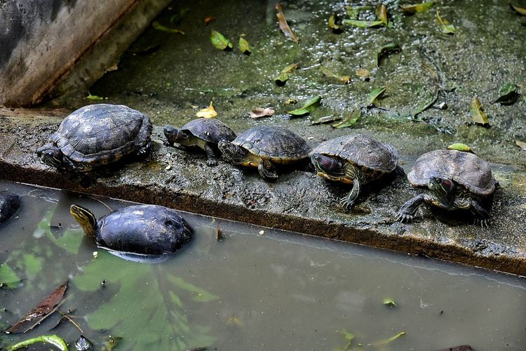 Animal Themes Water No People Day Nature Outdoors Close-up Tortoise Shell Beauty In Nature Animal Wildlife Animals In The Wild One Animal Reptile Sea Life Tortoise UnderSea