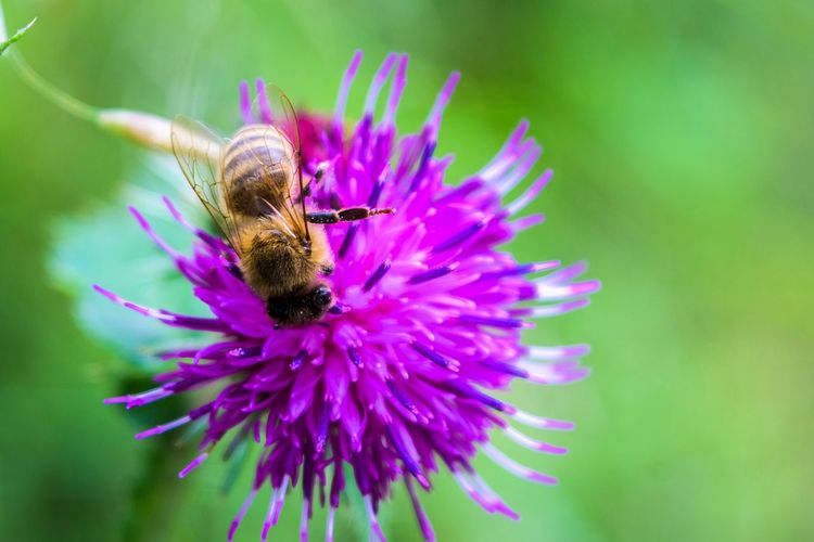 Bee Flower EyeEm Best Shots - Macro / Up Close Taking Photos Eye4photography  Open Edit