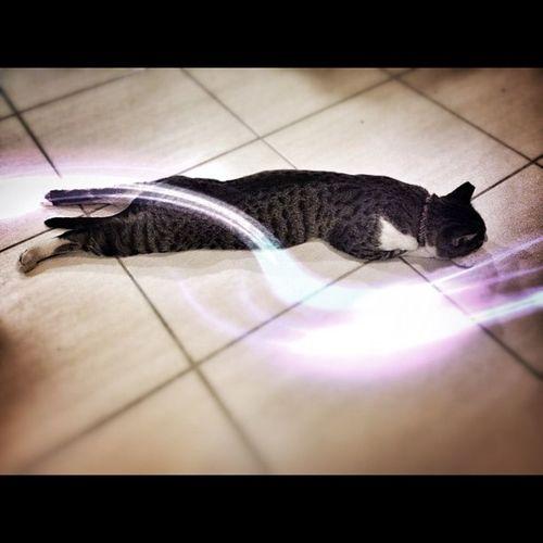 Galactic cat approaches Warp Factor 9
