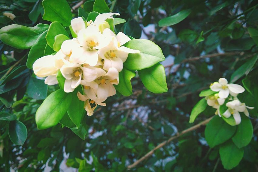 Flower Themes Green Color Beauty In Nature Focus On Foreground Write With Colors EyeEm Nature Lover EyeEmNewHere Welcome To Black Long Goodbye EyeEmDiversity