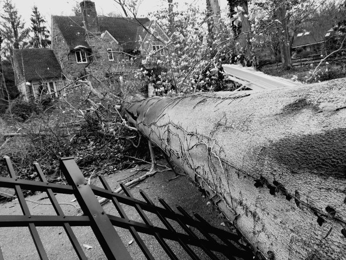 Great old tree fallen across a fence near a stone house. Architecture Day Nature Low Angle View Tree No People Built Structure Outdoors Growth Branch Full Frame Building Exterior Close-up Fragility Plant