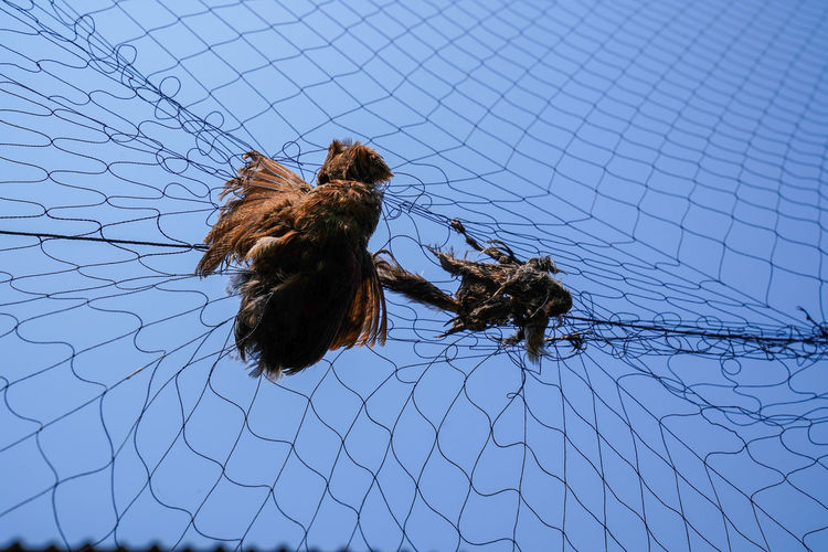 Sky Animal Animal Themes Low Angle View Animal Wildlife Animals In The Wild No People Clear Sky Nature Vertebrate Bird Day Group Of Animals Outdoors Two Animals Mammal Fence Power Line  Blue Trapped Net
