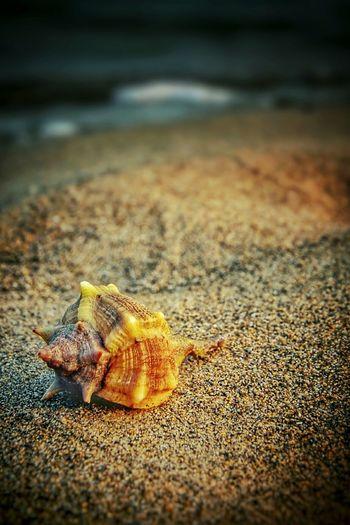 seashell on shore Seashells Sea_collection Seashell Seashell❤ Seashore Seashell Seashell, By The Sea Shore Seashell Collection Seashells, Sand And Water Seashells From The Seashore Shell EyeEm Nature Lover Eyeeyeem Best Shots - Nature EyeEm Best Shots EyeEm Best Edits
