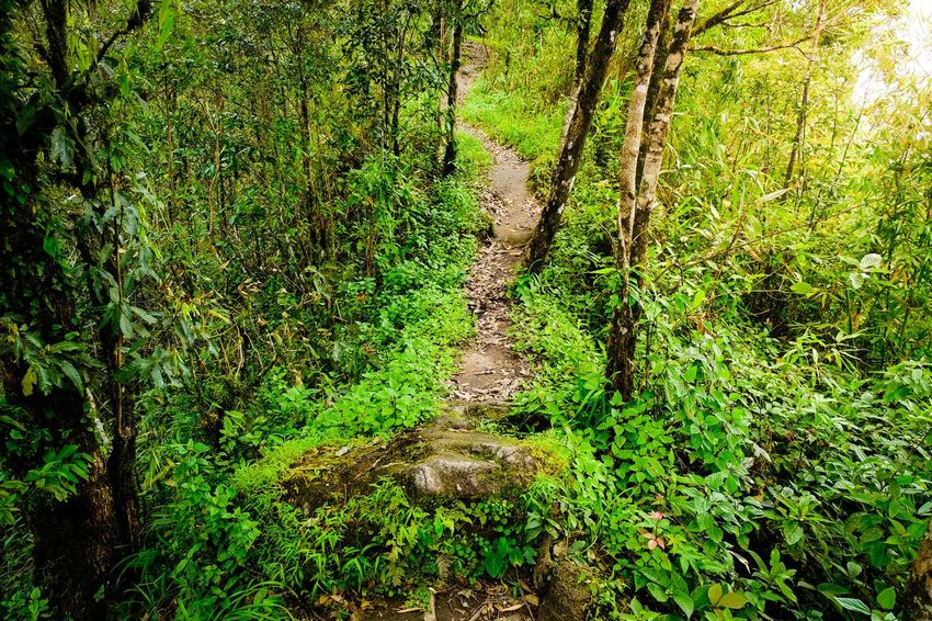 Hiking Walkway Walkway To Nature Ridge Full Frame Field Backgrounds High Angle View Sunlight Grass Green Color Green Woods Young Plant