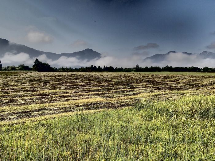 Scenic view of field against fog and mountain range Bayern Blaues Land Betterlandscapes Fog Tranquil Scene Sky Landscape Plant Field Environment Tranquility Tranquil Scene Sky Landscape Plant Field Environment Tranquility Rural Scene Agriculture Scenics - Nature Mountain