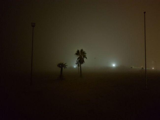 Outdoors Fog Foggy Nightshot Moody Colours No Filter Seaside Sea At Night Beach Walk Walking Around At Night No Stars Shadows Shadows & Lights Natural Sepia Palm Trees Sand Feet On The Beach