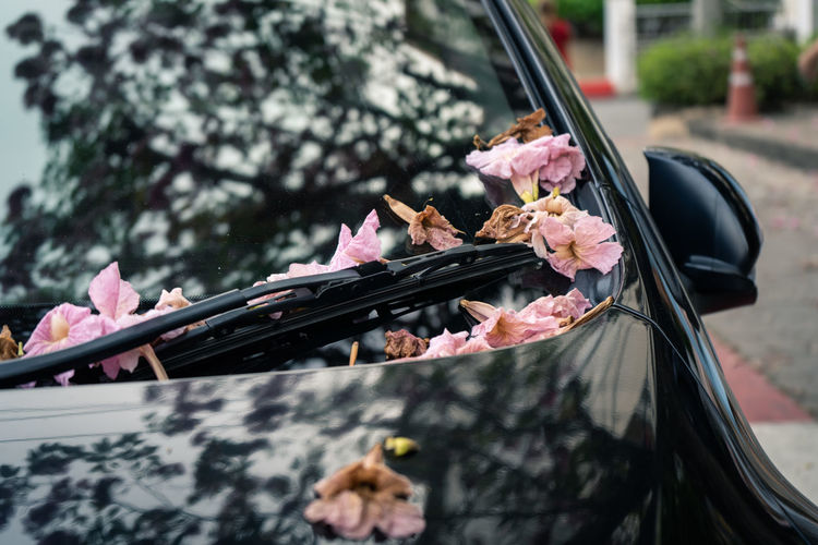 Close-up of pink flowers on car bonnet