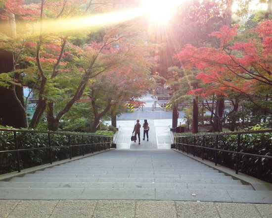 Autumn Japan Lovers