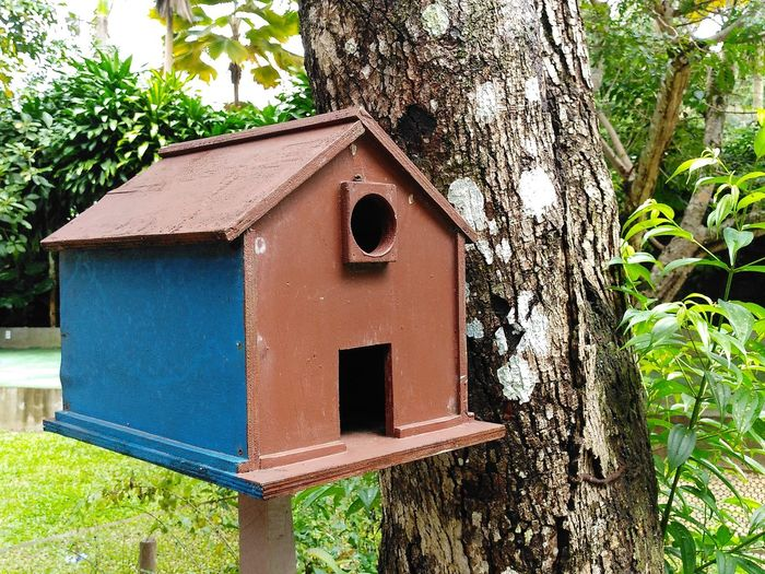 a blue and brown birdhouse in a park Birdhouse Blue Brown Park Nature Green Tree Home
