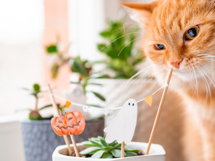 Close-up of cat by potted plant at home
