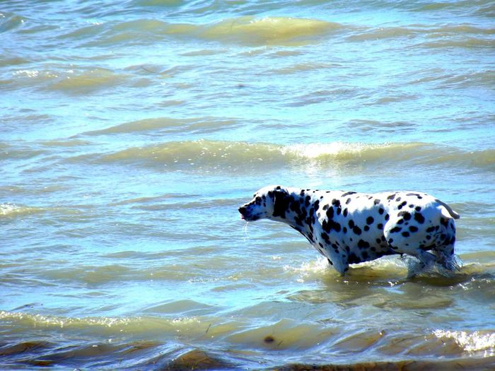 Summer In The City Hot Day Great View Dog Life Baltic Sea Strange Sea Water