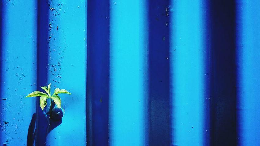 Holiday POV alone Livingalone GreenAndBlue  Leaf Blue Green Smartphonephotography Xperiaphotography Zemiphoto