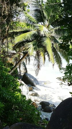 Tree Palm Tree Tourism Strand Non-urban Scene Nature Idyllic Travelphotography Travel Travel Photography Seychellen Mahé Tourist Seychelles Tropical Tree Outdoors Beauty In Nature Nature Coconut Palm Tree Palm Tree Traveling