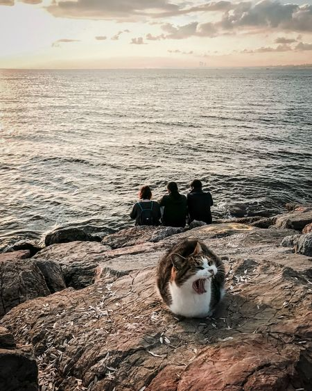 Rear view of people sitting at beach while cat on rock during sunset