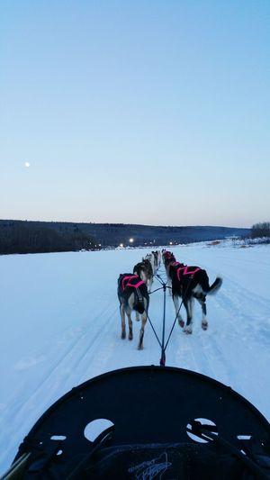 Siberian Huskies Pulling Sled On Snow Covered Field Against Sky At Dusk