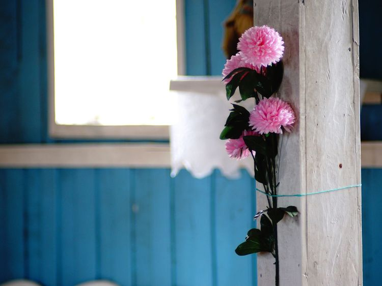 Light at the end Flower Petal Architecture Church Window Flower Head No People Fragility Freshness Day Hope Dream Beauty In Nature Sony A6000 Tranquil Scene Focus On Foreground Outdoors Close-up Nature House