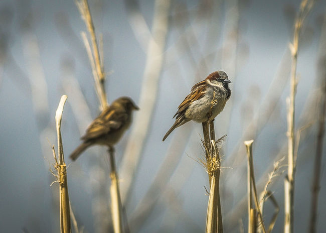 Animals In The Wild Beauty In Nature Bird Branch Close-up Nature No People Outdoors Perching Plant Selective Focus Sparrow