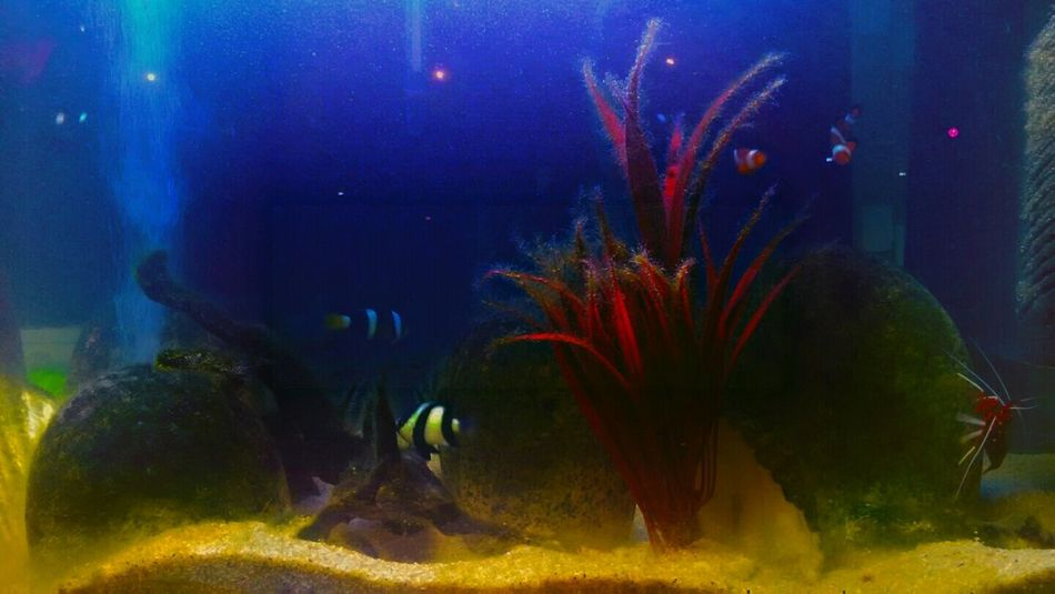Aquarium fish Aquarium Life Global Photographer Works Exhibition Taken On Mobile Device Inspiration_photography Neon Lights Underwater Found On The Roll Stock Photography Snap Everywhere Takeoverinspiration Pet Photography  Aquariumfish No People Poetrycommunity SensExperiencE Bright Colors Eye For Photography Color Photography Athmosphere The Illusionist Popoular Photo  EyeEm Gallery Fine Art Photography Mix App EyeEmNewHere Neon Life Pet Portraits Animal Themes Swimming