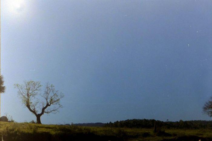 35mm Film Pentaxk1000 Taking Photos Enjoying Life Sunset Lovethisone Eadspy
