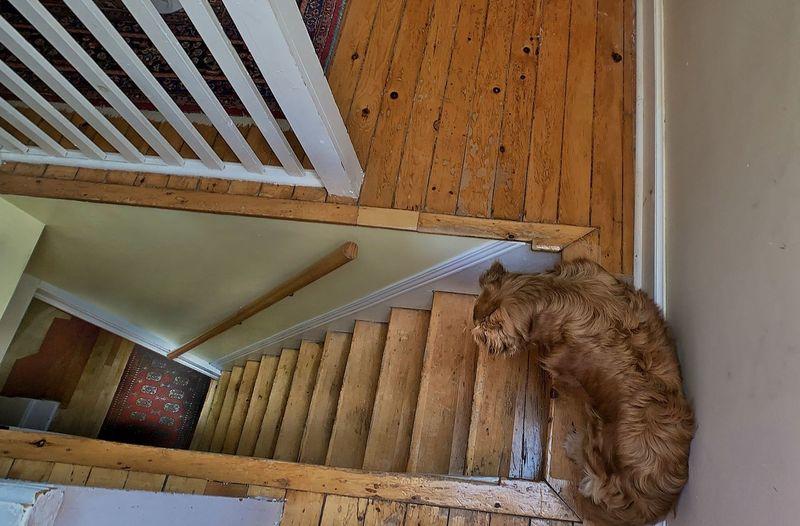 Cat relaxing on wooden floor