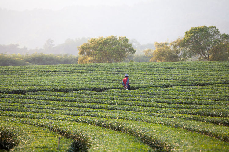 Rear view of man standing amidst plants at farm against sky
