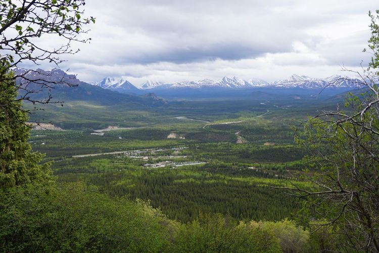 Scenic view of landscape at denali national park