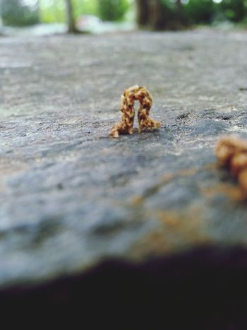 Capture The Moment Bugslife Inchworm Blurred Keep It Blurry Nature Outdoor Adventures