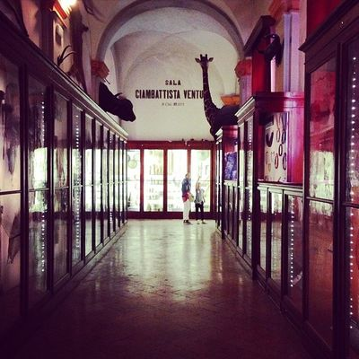 #museicivici #reggioemilia #reggionarra #lifeisbeautiful #lifelessordinary #meshpics #webstapic