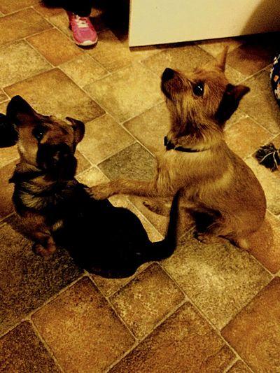 Puppy LoveBromanceforverveR ❤️