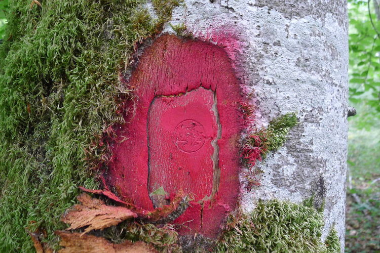 Close-up of red paint on tree trunk