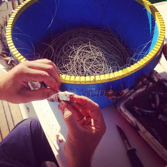 Man preparing longline fishing tool Catch Croatia Dalmatia Dirty Fisherman Fishing Longline Man Mediterranean  Outdoors People Preparation  Real People Sardines Sea Tool Working
