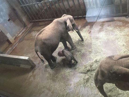 Animals Baby DUMBO Ear Elephant Elephantbaby Parenting Side View Zoology