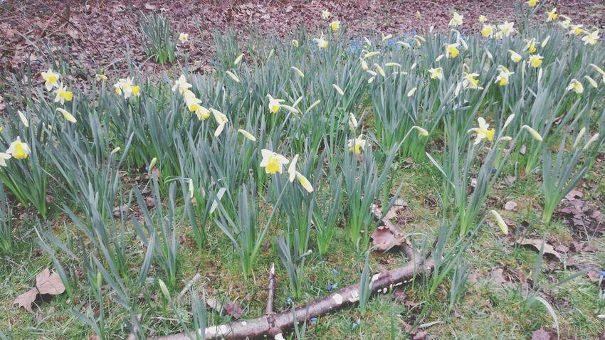 Flower Nature Yellow Grass