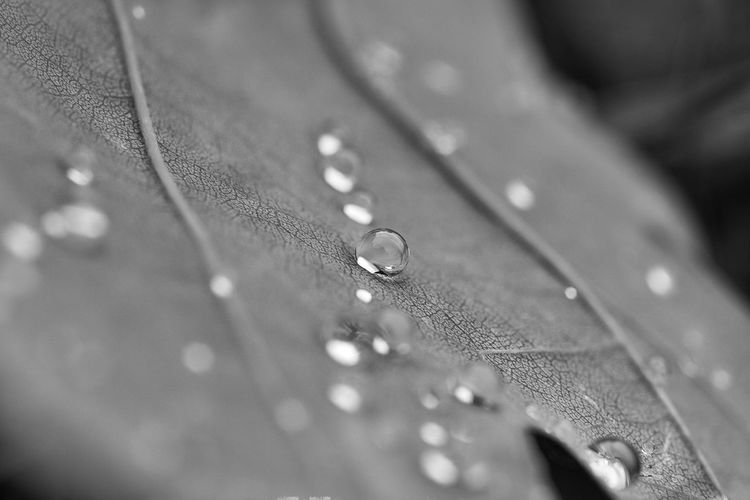 water drops sticking to a fallen leaf Water Drop Selective Focus Close-up Wet No People Pattern Full Frame Textile Indoors  Rain Backgrounds Nature Day Clothing High Angle View Textured  Vulnerability  RainDrop Dew Purity