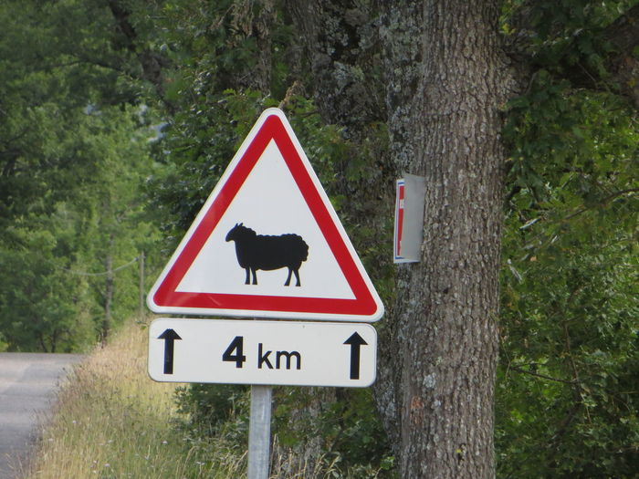 Sheep Sheep Funny Signs French France Frankreich Attention Animal Sheepherd Road Road Sign Sign Signs Beware Of... Beware Summer Sweet Dangerous Shepherd Schaf  🐑