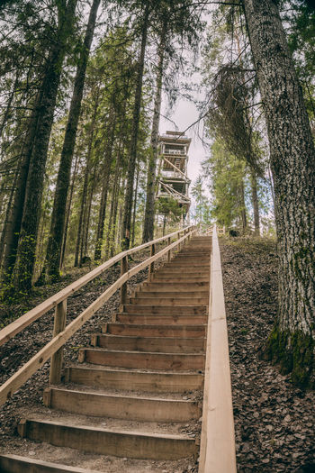 Low angle view of staircase amidst trees in forest
