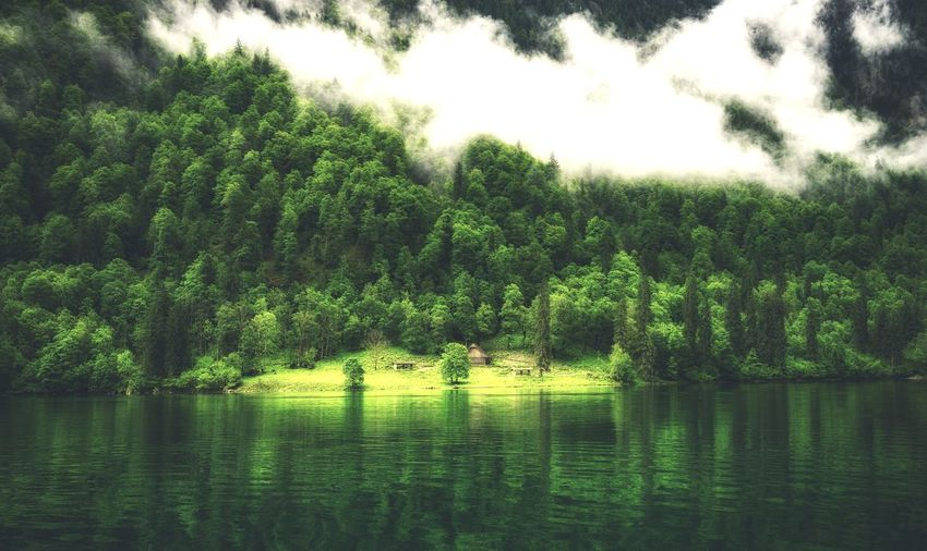 Bavaria The Week On EyeEm Www.alexander-schitschka.de Water Nature Morning Tree Germany Forest Wasser Freshness Travel Destinations Outdoors Deutschland Mountain Lake View Green Color Growth Nature Fog Mist Bavaria Bavarian Alps Glow