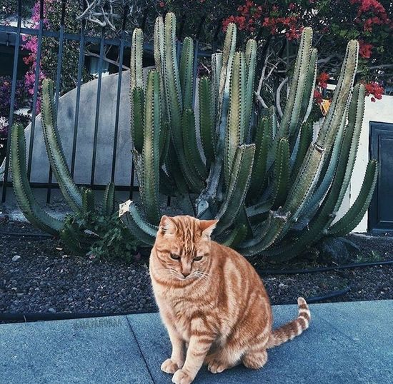 Portrait of cat sitting by plants