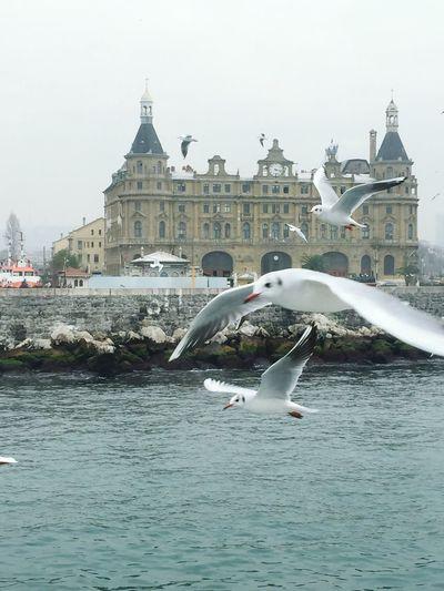Gulls Bhosporus Sea