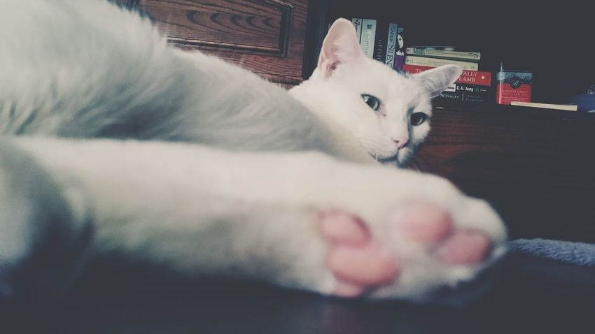 The Purist (no Edit, No Filter) Cat Lovers Mycatisthebest Pink! Whitecats Lovemypets