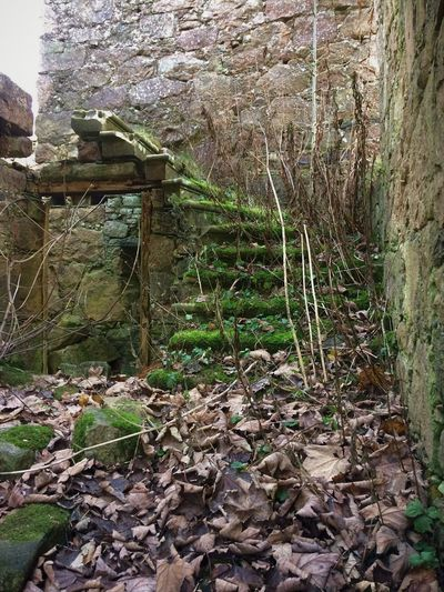 Abandoned Abandoned Buildings Architecture Beauty In Nature Building Exterior Built Structure Day Growth Moss Nature No People Outdoors Overgrown Plant Stairs Stairs To Nowhere Steps Tree